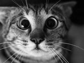 Pour plaisir sourire drôles chats