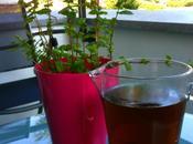 glacé menthe (Mint tea) Marmiton