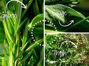 Recette plein fines herbes pour l'hiver