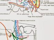 Efficacité sécurité l'hormone parathyroïdienne humaine recombinante (1-84) dans l'hypoparathyroïdie (REPLACE) étude phase double aveugle, randomisée contrôlée placebo