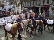 activités équestres, cheval bataille Horde