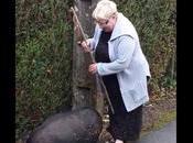 cochon noir devant porte Lady Galga matin réveil