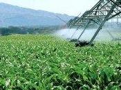 Développement agricole projet régional lancé partir l'Algérie début 2014
