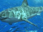 Quand requins tweetent!