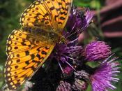 papillon pour débuter semaine