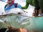 Patagonia pêche mouche-catalogue