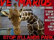 Pétition sauvons Marius girafon Jyllands Park