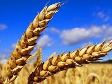 impression grâce céréales
