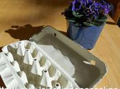 Recyclage boite oeuf pour bouture
