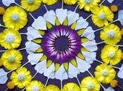 Mandalas fleurs Kathy Klein