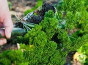 Bien choisir plantes aromatiques