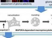 CANCER: font exploser cellules cancéreuses vacuolisation