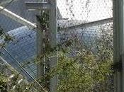 Visite Parc zoologique Paris semaine avant réouverture