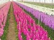 direct très belles fleurs saison
