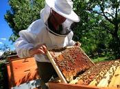 L'effondrement colonies d'abeilles cherchez l'erreur