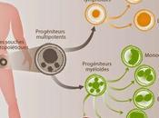Survivre changements voyage métabolique cellules souches hématopoïétiques