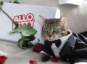 Allo Kitty livraison express chat domicile