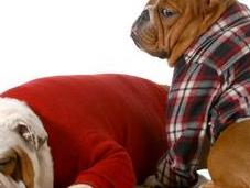 ménopause chez chienne existe-t-elle