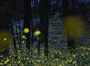 arbres bio-luminescents pour remplacer l'éclairage public