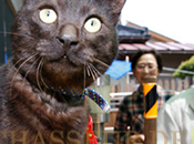 chat retrouve maître après Tsunami Japon