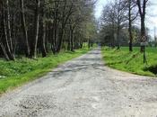 L'allée couverte Brohet dans Forêt Beffou Loguivy-Plougras (22)