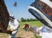 abeilles sous haute surveillance