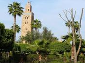 vraie histoire faux palmier Marrakech