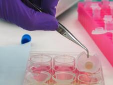 Visite laboratoires L'Oréal Episkin