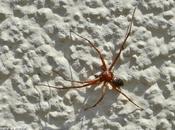 chasse courre secret pour araignées...