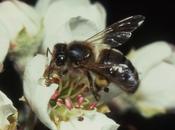 systèmes culture favorables abeilles