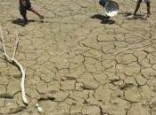peut stopper désertification Inde