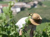 Vins Beaujolais Dégustation millésime 2013
