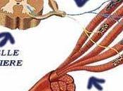 thérapie génique curcumine