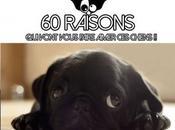 raisons vont vous faire aimer chiens