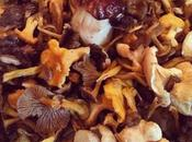 Picking day/cueillette jour. 🍄🌲😋#mushrooms #france...