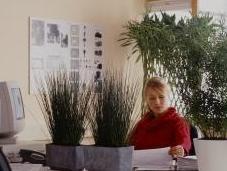productivité plus avec plantes dans bureaux