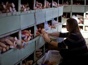 """Doll Hospital"" Jason Reed, Sydney, Australie Photographie"