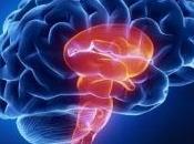 NEUROBIOLOGIE SOMMEIL: Mais pourquoi s'endort-on? Nature Neuroscience
