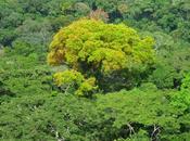forêt d'Ankasa Ghana
