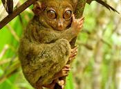 animaux plus particuliers Planète