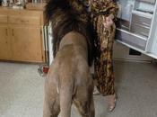 famille Mélanie Griffith avait lion pour animal compagnie