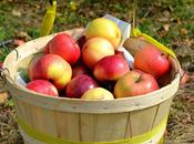 automne l'américaine cueillir pommes potirons York