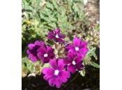 pouvoir fleurs