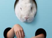 danger devenir lapin blanc, stressé
