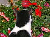 Orson sapin Noël