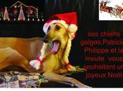 Joyeuses Fêtes d'année tous amis(es) pattes