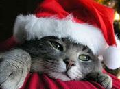 Joyeux Noël avec Magnus Carlsen