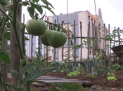 L'agriculture urbaine Paris