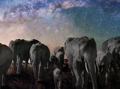 nuit éléphants