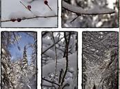 beauté hiver... Québec